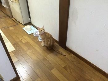 cat_4441_1.jpg