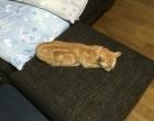 cat_4441_2.jpg
